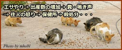 エサやり→出産数の増加→糞・鳴き声→近隣住民の不... 猫の殺処分について~原因と現状を知り、処