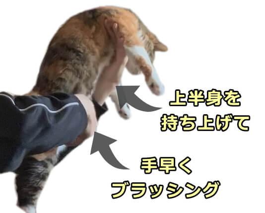 猫 ブラッシング 嫌がる