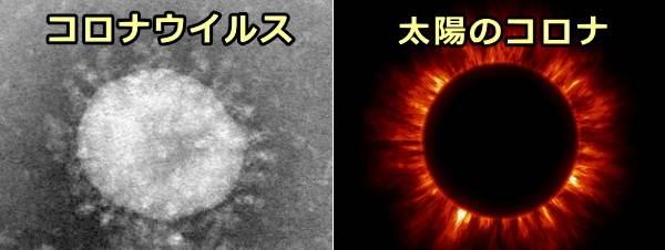 コロナウイルスのスパイクタンパクと太陽の放つコロ... 猫伝染性腹膜炎(FIP)~症状・原因から