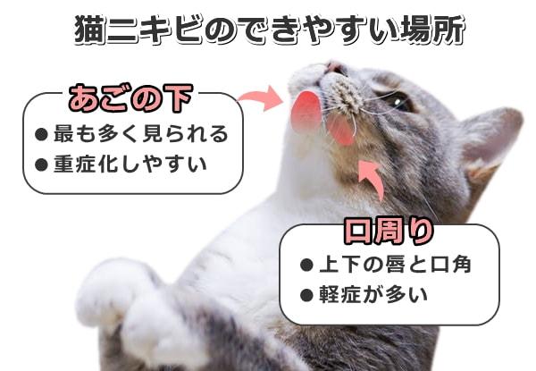 顎 ニキビ 猫