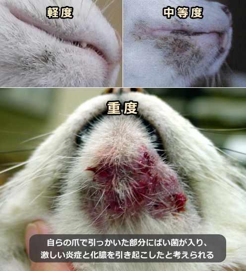 猫ニキビ~症状・原因から治療・予防法まで猫の皮膚の病気を知る