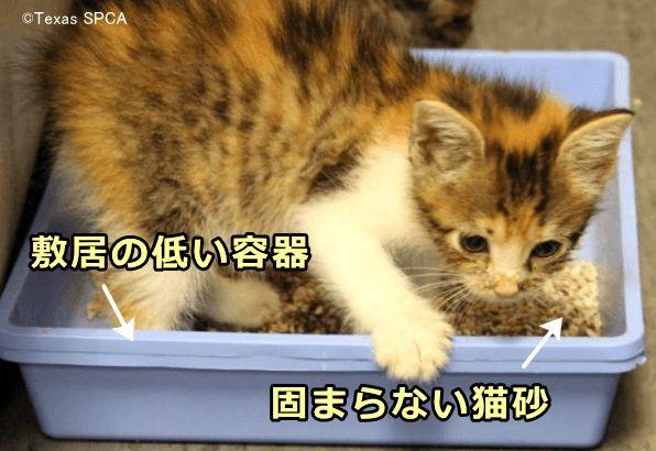 赤ちゃん 猫 注意点