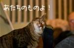 猫がすりすりしてくる心理。猫が体をすりつけてくる理由を知ろう