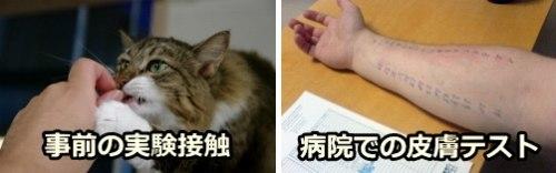 猫アレルギーの事前チェック