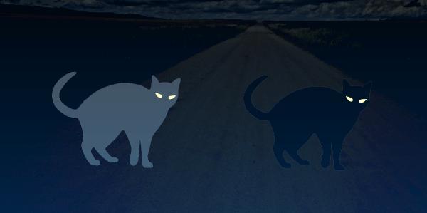 闇夜における白猫と黒猫の視認性比較