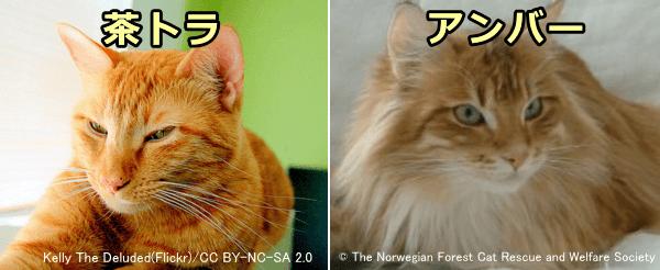 猫の品種】ノルウェージャンフォレストキャットが1ページでまる