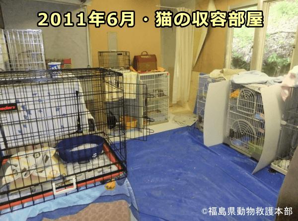 開所から2ヶ月経過した2011年6月における飯野シェルター猫収容部屋の様子