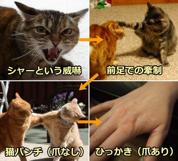 猫のひっかき・噛む癖をやめさせ...