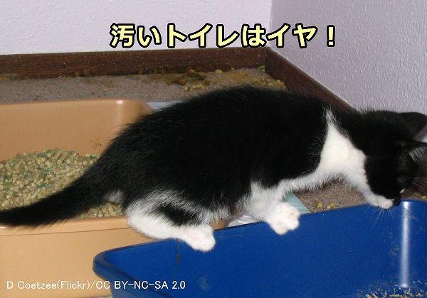 子猫 うんち ゆるい