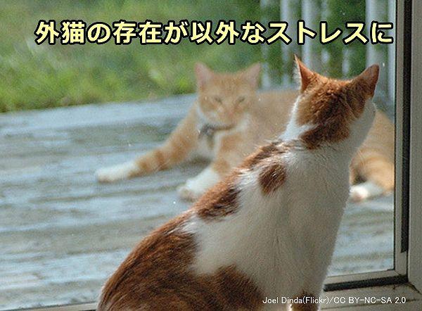 うんち 以外 猫 トイレ で