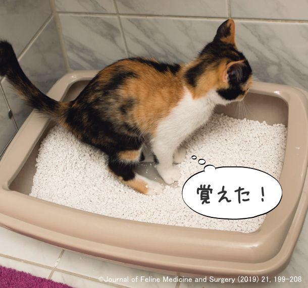 うんち 猫 で トイレ 以外