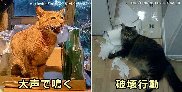 猫 分離 不安 症
