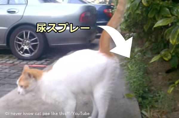 マーキング しつけ 猫