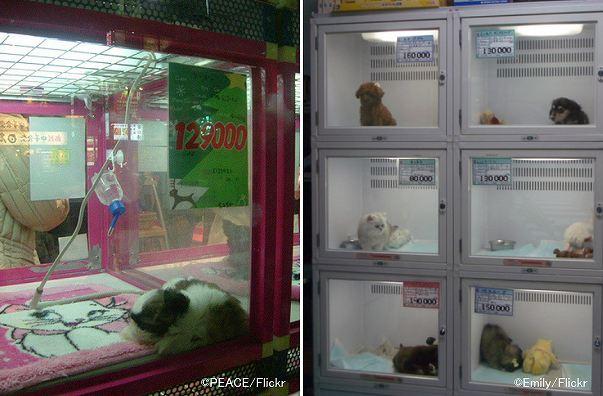 の たい 買い ショップ の ペット 売れ残り を 犬