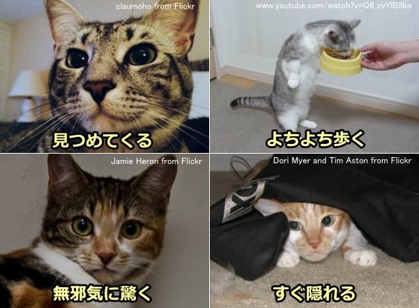 猫が見せる可愛いしぐさの数々